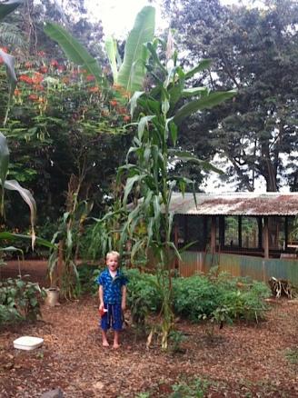 The farm, Konongo