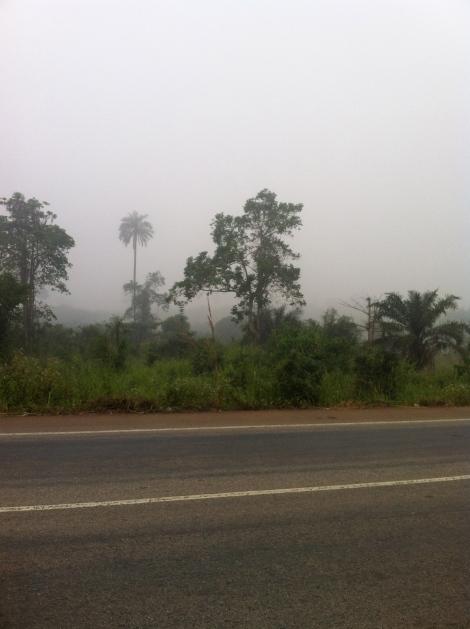 Morning mist 3