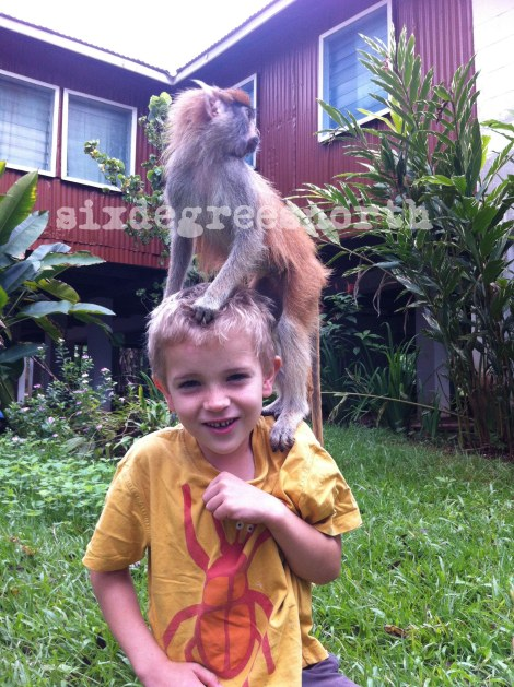 max the pet monkey