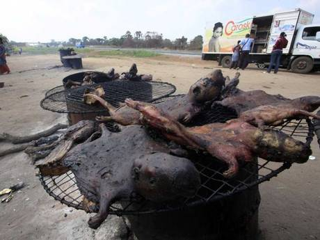 Bush meat can make you sick! Whoever would have thought...