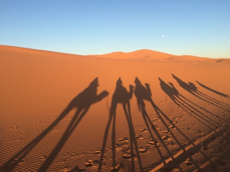 Searching the Sahara for the three wise men....alas, found only ourselves.